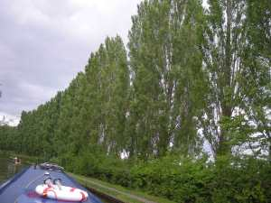 Whispering birches in Milton Keynes