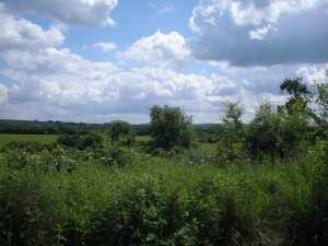 Rolling farmland (1)