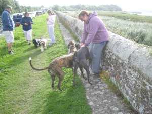 Crew plus dogs!