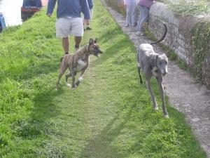 ASBO dogs