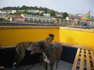 Blue and Lou on the ferry!
