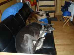 Blue cuddling up to Lou for comfort in the storm