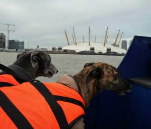 Blue AND Lou at the O2