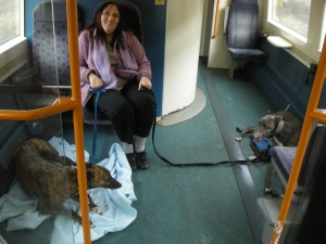 Blue and Lou on a commuter train!
