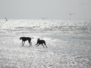 dogs_22mar09_0030a