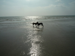 dogs_22mar09_0052