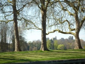 Windsor Castle (park side)