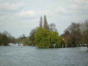 Looking back towards Sonning Lock