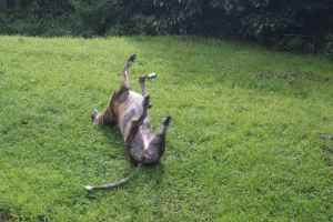"""Contentment Roll 4: """"Ooh aah, it's not that easy to roll over...."""""""