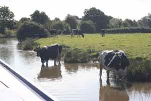 Canal users come in many shapes and sizes...