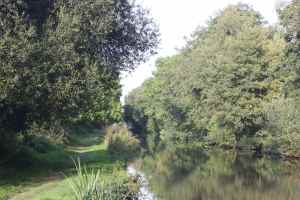 Softly wooded canal - there's lots of squirrels in those woods...