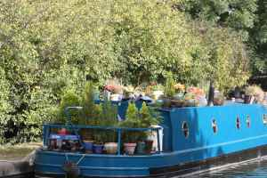 How does your garden grow? Could leylandii become a nuisance on boats as well :-)