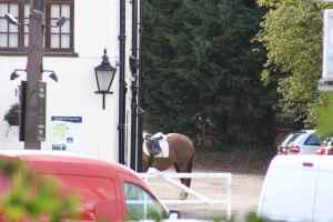 A horse in the pub car park - very traditional, when you think about it :-)