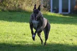 r_dogs-13Nov2011- 136a