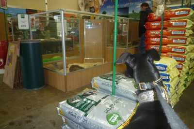 Deer Mummi Archie sez that Pets at Home have the bestest pick 'n mix section for greyhoundies.. xxx HBB