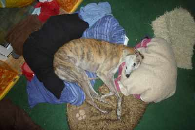 Deer Mummi Fis is Monty - wot has got all the beds and is very cumfee xxx Henry B Beanz