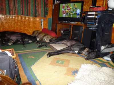 r_Dogs-273-01Dec12