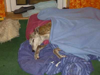 Deer Mummi See, no dramas at all, fis is Monty, wot is all worm under his blankie... xxx Henry B Beanz