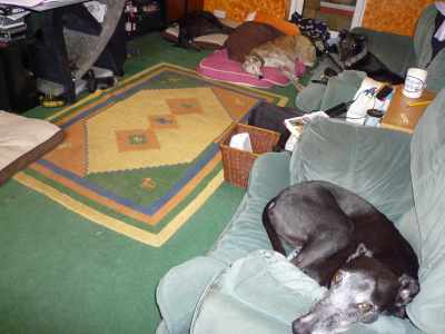 December: having 7 greyhounds for a month was defiinitely a highlight :-)