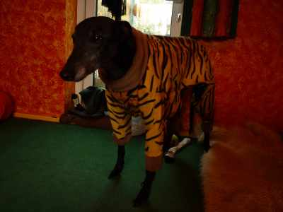 November: A cold snap - time for houndie pyjamas maybe - uh, maybe not, judging by Ollie's expression!