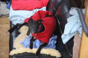 Ollie and Ty spent the day swaddled in their fleece coats and blankets with the heating going full blast!
