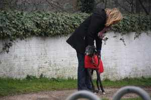 Ty having a lean - leaning on humans is a major greyhound activity (after snoozing and eating) :-D