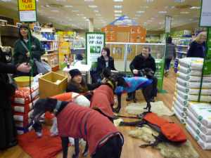 Part of the Greyhoundhomer team - Ollie's hasn't really got the meet 'n greet spirit though ;-)
