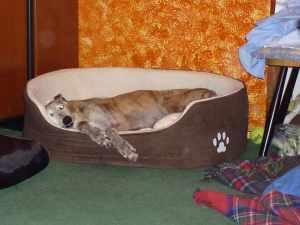 Monty steeled me bed!