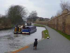 Such a companionable way to cruise - overseen by Alfie on the towpath!