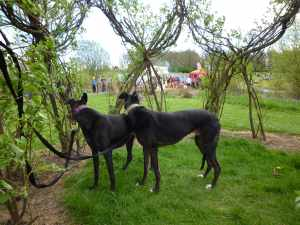 Ty liked this little grove - it obviously felt safe- he was soon pursued by two dog-loving children who lavished him with fuss..
