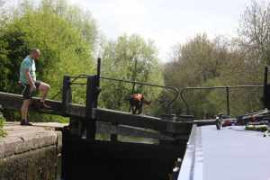 Cassie getting the hang of crossing the lock gates - she was quite agile after a few tentative trial runs..