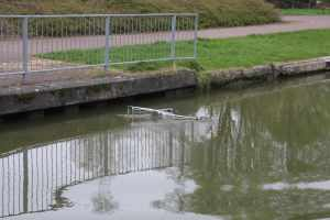 Why is it fun to push trolleys into the canal?