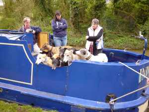 Ooh is it time for a walk? - moored up near the Blisworth tunnel..