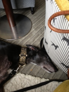 Fis is me having a snooze after me buffit brekfust - hotel brekfusts is qwite nice...