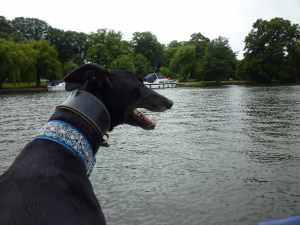 """Archie is the only """"looking"""" crew left - he has been an outrageous tart on this trip - everyone on the river knows him :-)"""