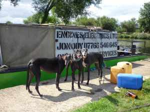 The Green Boat Company - good with boats and they like greyhounds - what's not to like :-D