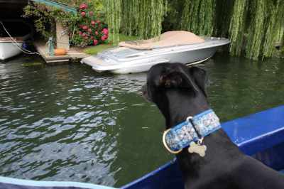 Hmm, that looks like a better surveillance boat - Step-mummy Sue, they're not using that boat, go and get it for me....