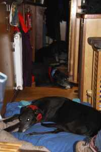 Four black hounds - unimpressed by the rain - That's Jack in the galley - he was every excited to be allowed so close to the food!