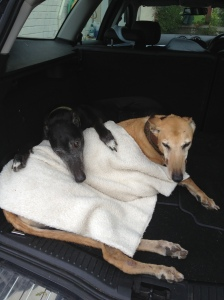Youz can snooze anywere - like in the boot of the car after a hexhaustin' session of swimmin' wif wimmin' like wot Ranger dun here. Ranger woz shiverin' so Big Sid jumped in to give him a cuddel - oh, an to use him as comfy cushin....
