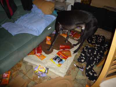 I luffs the 24-hour buffit - these chews woz just lyin' in a big plastic box with stuff piled on top - o' course we woz ment to eats it all at wunce.  Wot's that step-mumi Sue, it woz for layters? nom nom nom - it Is layters :-)