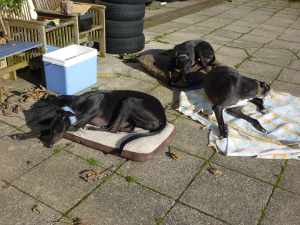 On holidaze, you haz to demand the bestest beds - even wen you is just snoozin' in the sun...