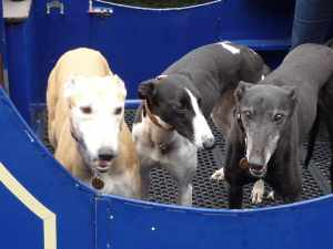 Kryssy (who wouldn't stand still), Keela (this is YOUR cruise) and Ollie (who does like the girls)....