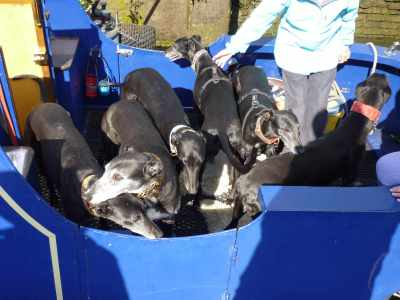 Six happy hounds on deck - sorry, that's just not enough...
