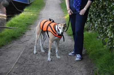 Peggy-Sue trying a life-jacket for size - she wasn't impressed - we had a touch of the drama queens as she decided that she couldn't possibly walk while wearing it!