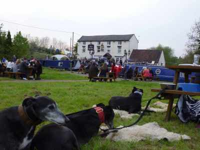 The hounds taking the beer festival in their stride - and you can see what a great mooring we've got :-)