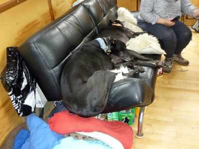 This is why Archie likes the deck - there's just not enough room on the sofa!