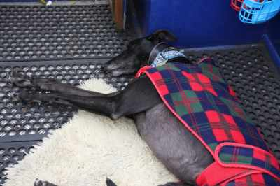 Plenty of room on deck (well, when there's just one greyhound!)...
