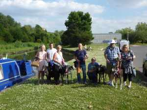 Group photo with all greyhounds facing the camera - regular readers will know that this is a photographic achievement!