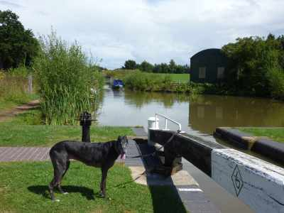 Ty supervising at the locks - it's better than being on the boat, but only if there aren't too many strange people around - not a problem here :-)