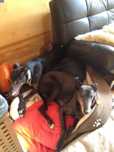 Ty and Ollie got a bit bored on the river so they cuddled up in a rare gesture of solidarity - too cute :-)
